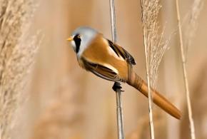 צילומי טבע  – הולנד