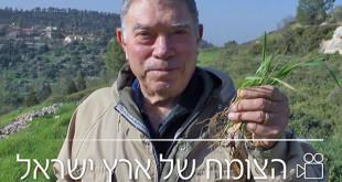 סיור וידיאו – צמחיית הרי יהודה – כסלון עד הר טייסים