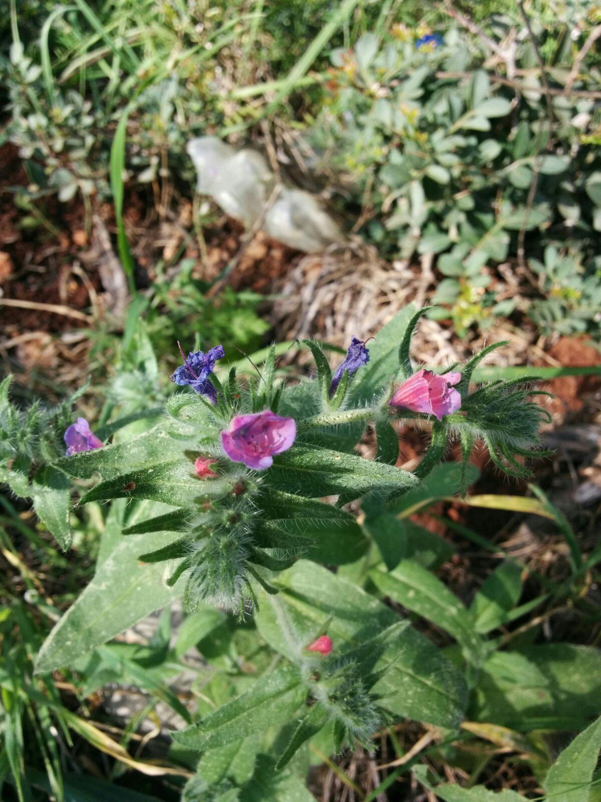 פרחי אביב ביער בית קשת