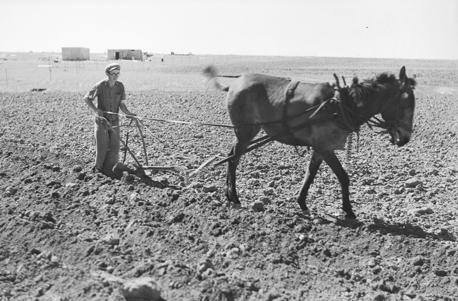 יצחק מלבסקי חורש באדמות בארות יצחק