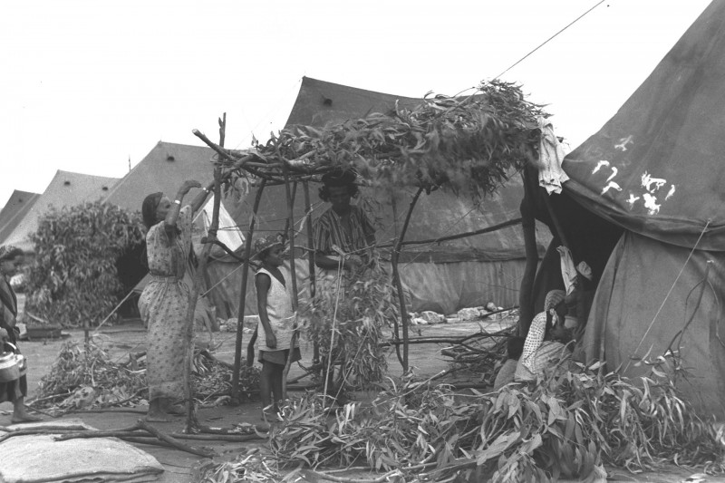 """עולים מתימן מקימים סוכה במחנה העולים שער מנשה, תשרי תשי""""א (1950) צילום:לשכת העיתונות הממשלתית"""