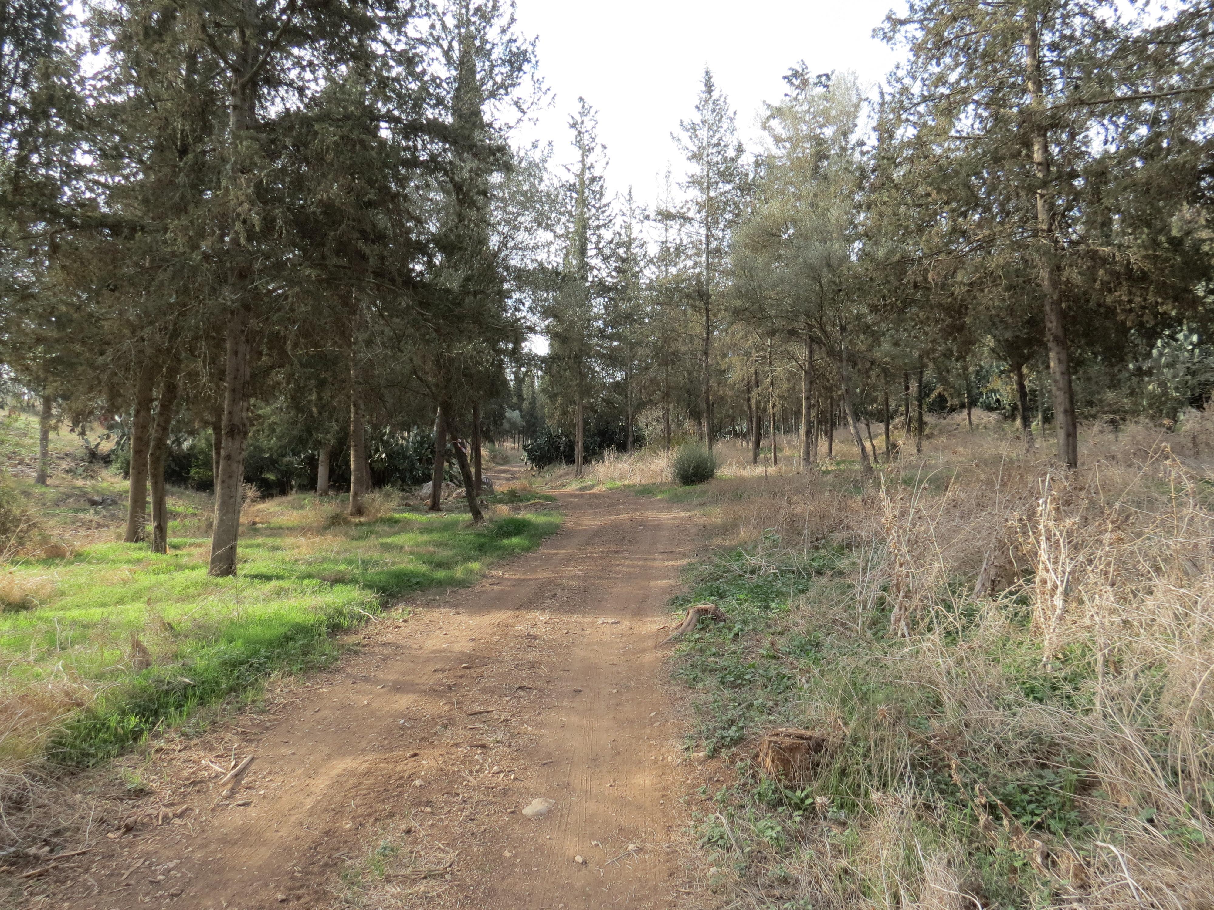 יער לביא