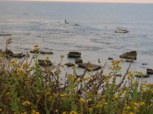 דיג אופטימי בחוף תל תנינים