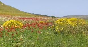 פרחי אביב של תל חנתון